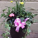 $50 potted plant